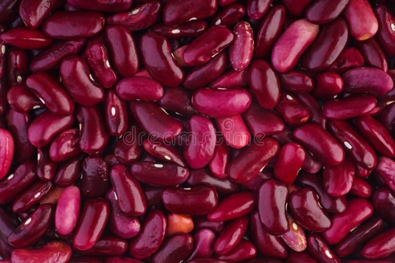 Πορφυρά φασόλια οσπρίων στοκ φωτογραφία με δικαίωμα ελεύθερης χρήσης