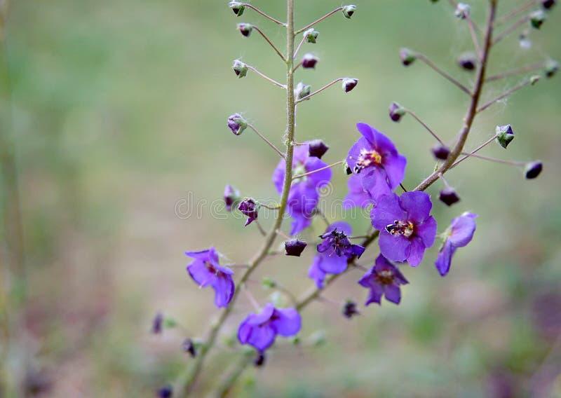 Πορφυρά wildflowers - κατάχαμα ομορφιάς στοκ φωτογραφίες με δικαίωμα ελεύθερης χρήσης