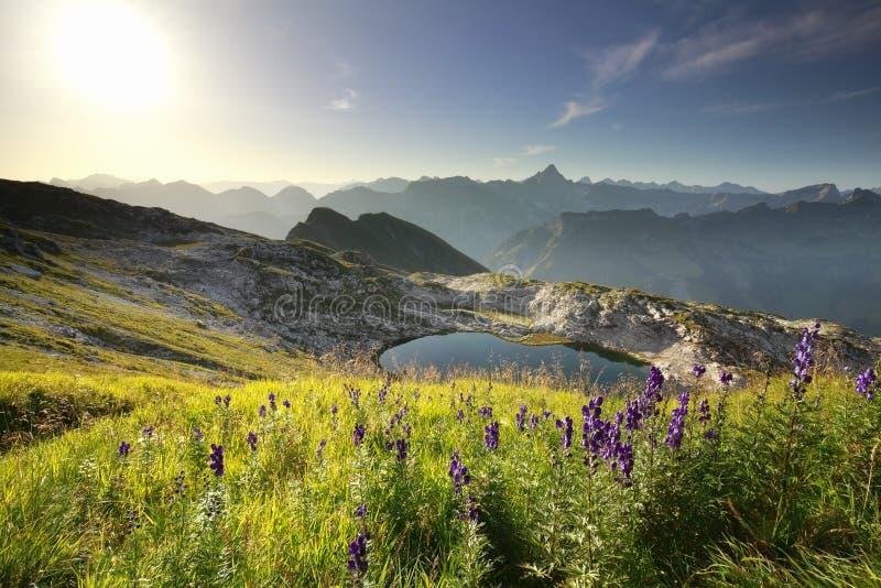 Πορφυρά wildflowers πέρα από την αλπική λίμνη στοκ φωτογραφία