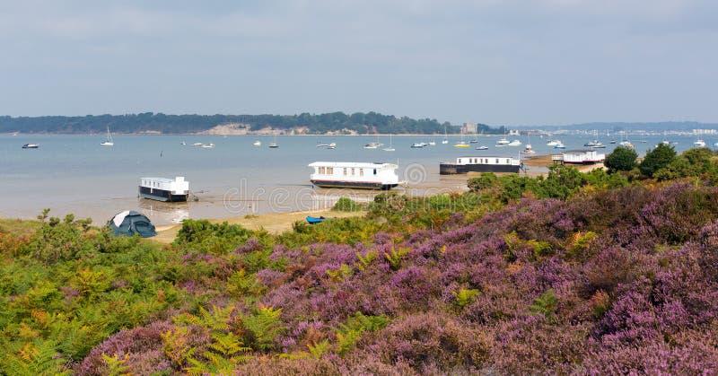Πορφυρή ερείκη με την άποψη στο λιμάνι Dorset Αγγλία UK Poole νησιών Brownsea στοκ εικόνες