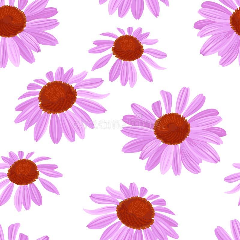Πορφυρό άνευ ραφής σχέδιο λουλουδιών Διανυσματική απεικόνιση ενός όμορφου echinacea άνθισης διανυσματική απεικόνιση