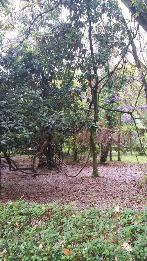 πορφυρό δέντρο στοκ εικόνα
