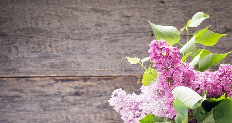 Πορφυρό ιώδες άνθος άνοιξη λουλουδιών στο ξύλινο υπόβαθρο στοκ εικόνα