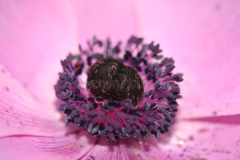 Πορφυρό λουλούδι επάνω στενό και προσωπικό στοκ εικόνες