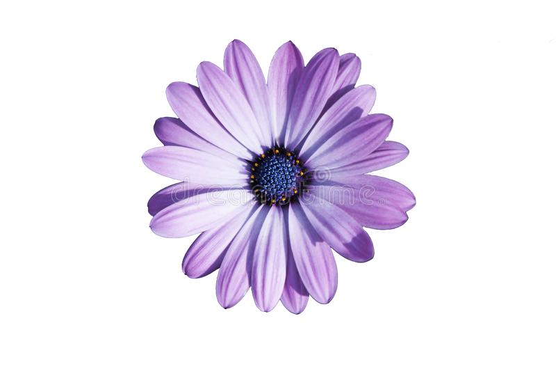 Πορφυρό λουλούδι μια ηλιόλουστη ημέρα στοκ φωτογραφία με δικαίωμα ελεύθερης χρήσης