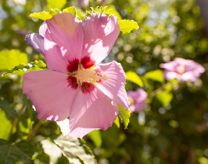Πορφυρό λουλούδι σε ένα πάρκο στοκ εικόνα με δικαίωμα ελεύθερης χρήσης