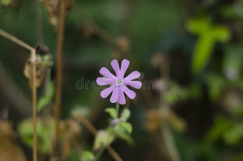 Πορφυρό λουλούδι στην αγριότητα στοκ εικόνες
