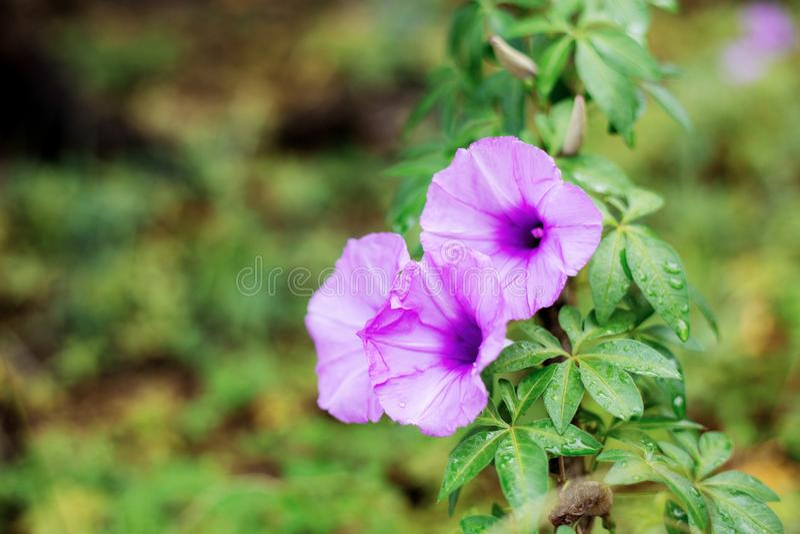 Πορφυρό λουλούδι στο δάσος στοκ φωτογραφία