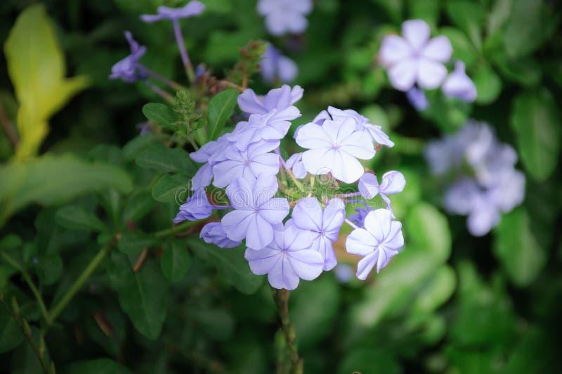 Πορφυρό λουλούδι στο floral πάρκο στοκ φωτογραφία