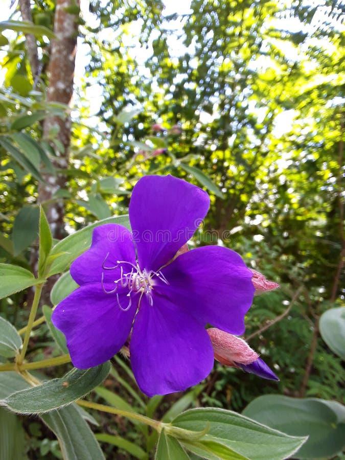 Πορφυρό λουλούδι στοκ εικόνα