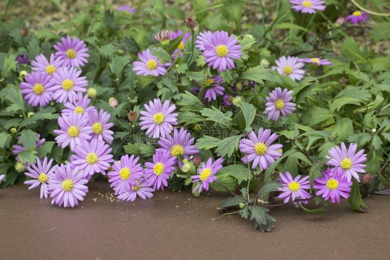 Πορφυρό λουλούδι και καφετί υπόβαθρο στοκ εικόνες με δικαίωμα ελεύθερης χρήσης