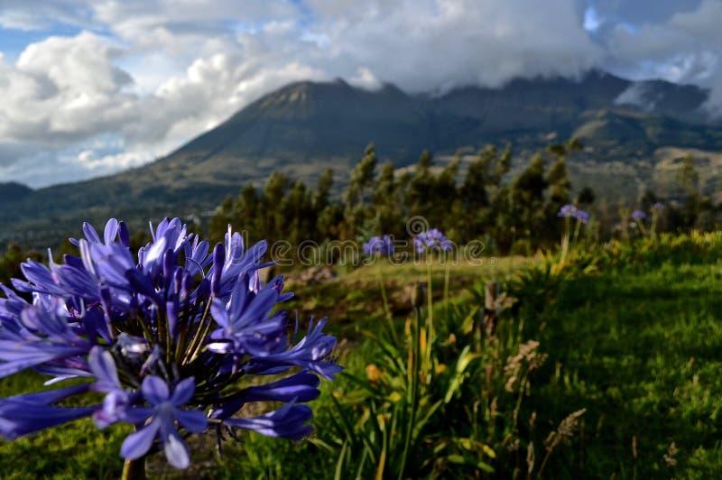 Πορφυρό λουλούδι κινηματογραφήσεων σε πρώτο πλάνο ενάντια στο τροπικό ντυμένο ηφαίστειο σύννεφων στοκ φωτογραφίες