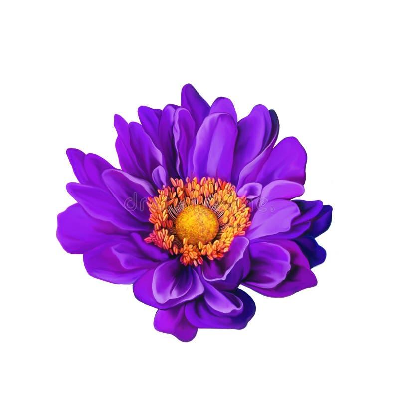 Πορφυρό λουλούδι της Mona Lisa, λουλούδι ανοίξεων απομονωμένος στοκ φωτογραφία με δικαίωμα ελεύθερης χρήσης
