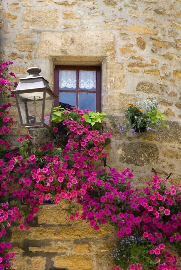 πορφυρό παράθυρο λουλουδιών στοκ φωτογραφία με δικαίωμα ελεύθερης χρήσης