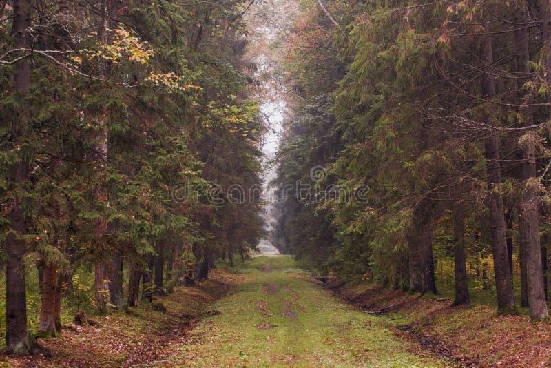 Πορφυρό τονισμένο δάσος φθινοπώρου με τα υψηλά δέντρα στοκ εικόνες