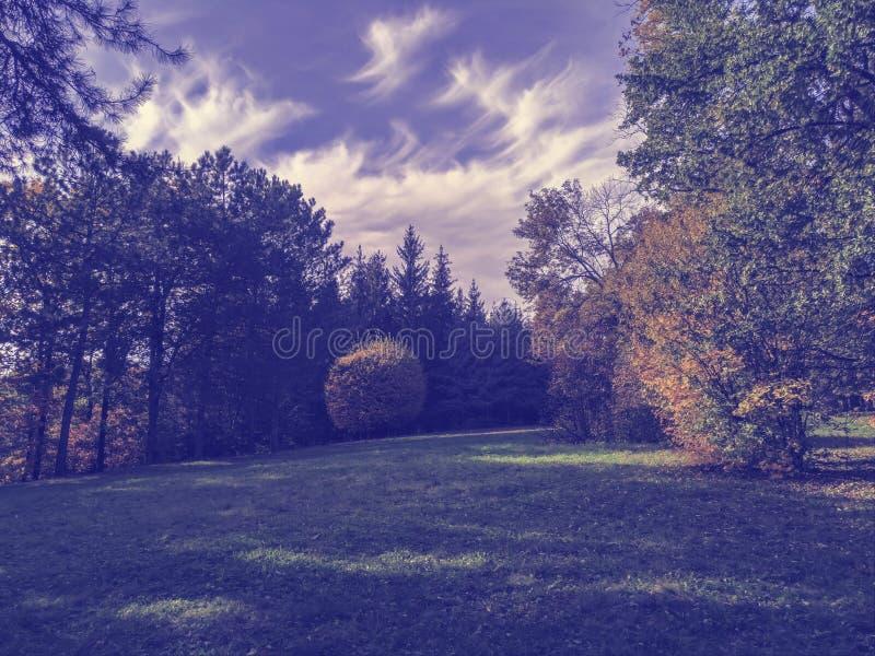 Πορφυρό τονισμένο τοπίο φθινοπώρου με τα δέντρα και το Μπους στοκ εικόνες