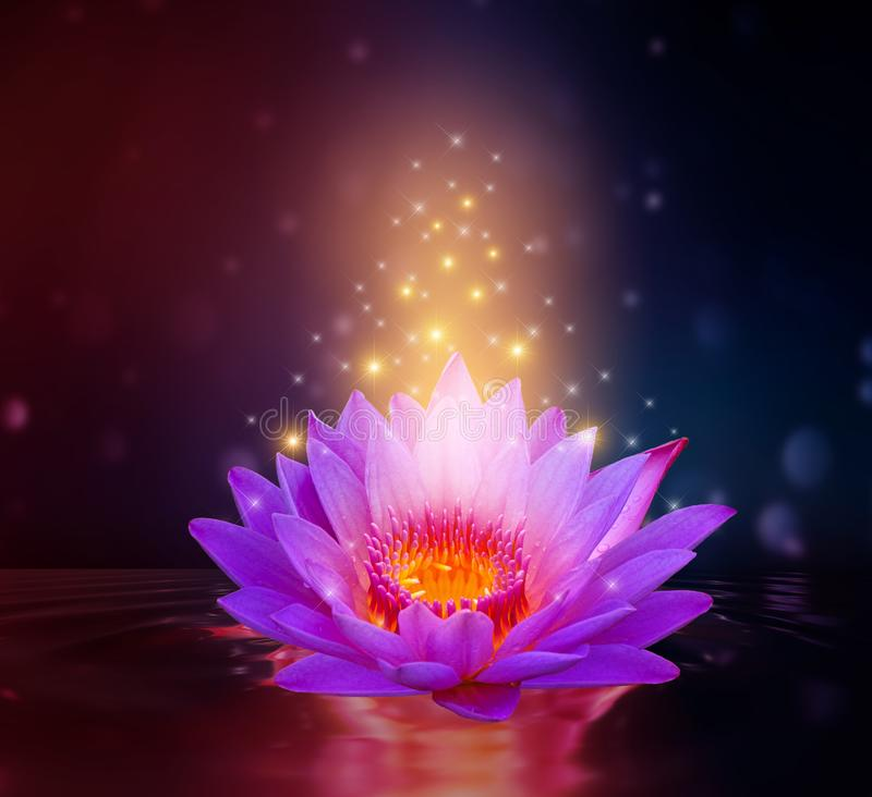 Πορφυρό υπόβαθρο σπινθηρίσματος Lotus ρόδινο ανοικτό μωβ επιπλέον ελαφρύ στοκ φωτογραφίες
