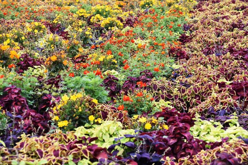 Πορφυρό χρώμα λουλουδιών στοκ φωτογραφία με δικαίωμα ελεύθερης χρήσης