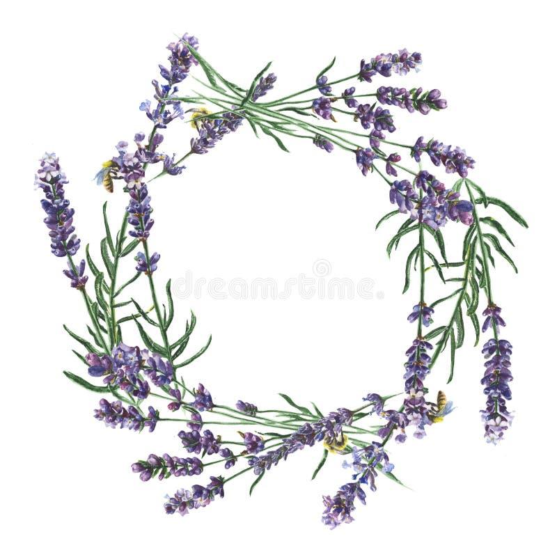 Πορφυρό lavender Floral βοτανικό λουλούδι Τετράγωνο διακοσμήσεων συνόρων πλαισίων στοκ φωτογραφία