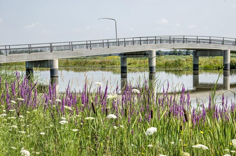 Πορφυρό loosestrife, συγκεκριμένη γέφυρα στοκ φωτογραφία με δικαίωμα ελεύθερης χρήσης