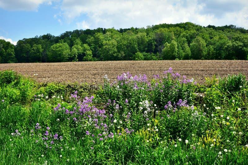 Πορφυρό Wildflowers στοκ φωτογραφίες