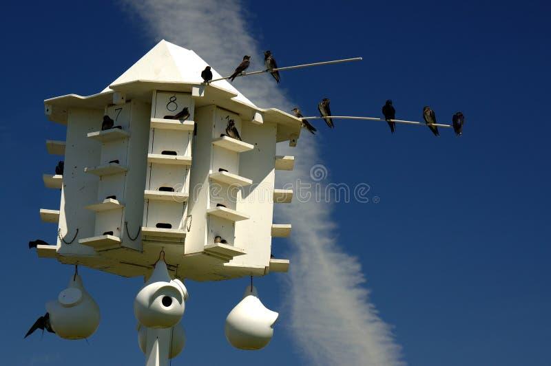 πορφύρα Martin σπιτιών πουλιών στοκ εικόνες