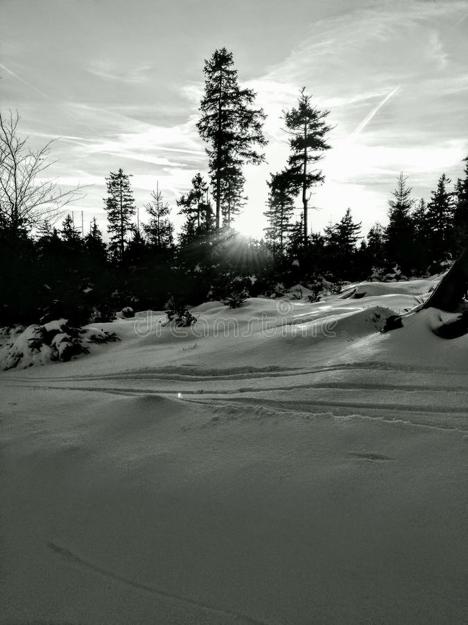 Ποσό δέντρων χιονιού με στοκ εικόνες