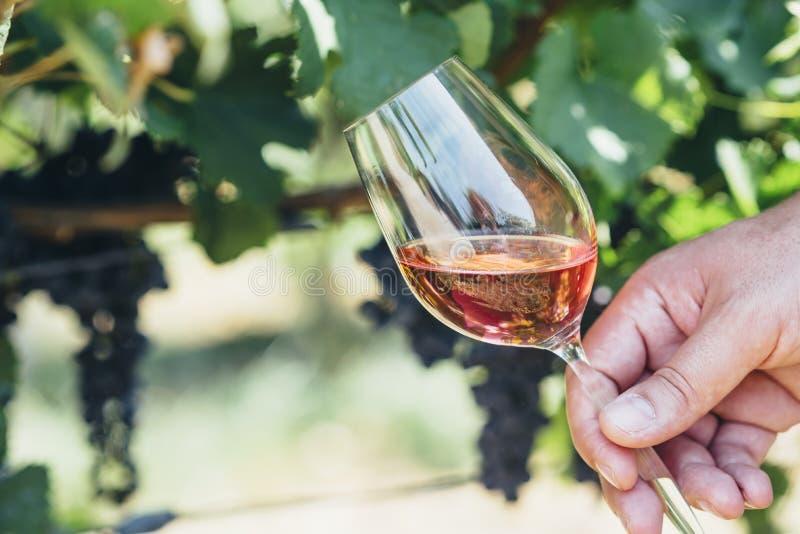 Ποτήρι εκμετάλλευσης ατόμων του κόκκινου κρασιού στον τομέα αμπελώνων Δοκιμή κρασιού στην υπαίθρια οινοποιία στοκ εικόνα