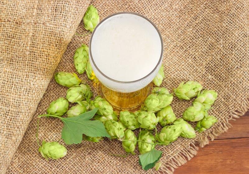 Ποτήρι της μπύρας μεταξύ των κώνων λυκίσκου sackcloth στοκ φωτογραφία με δικαίωμα ελεύθερης χρήσης