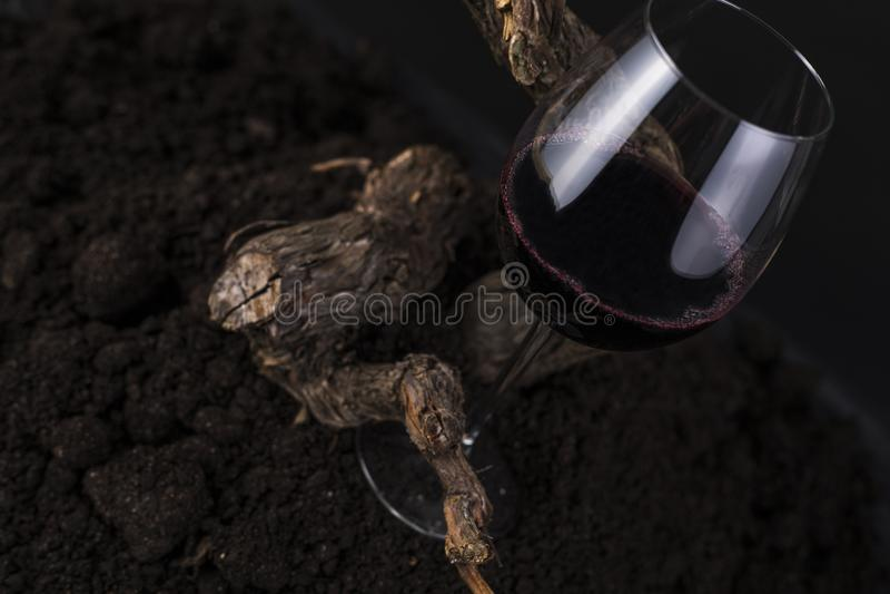 Ποτήρι του κόκκινου κρασιού με την άμπελο σε ένα μαύρο υπόβαθρο στοκ εικόνες