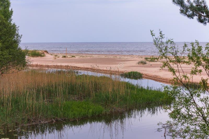 Ποταμός, άμμος, θάλασσα, καλοκαίρι - φύση της Λετονίας στοκ φωτογραφία