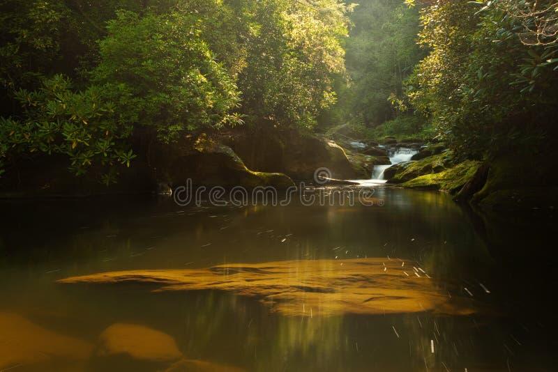 ποταμός αυγής chattooga στοκ εικόνες