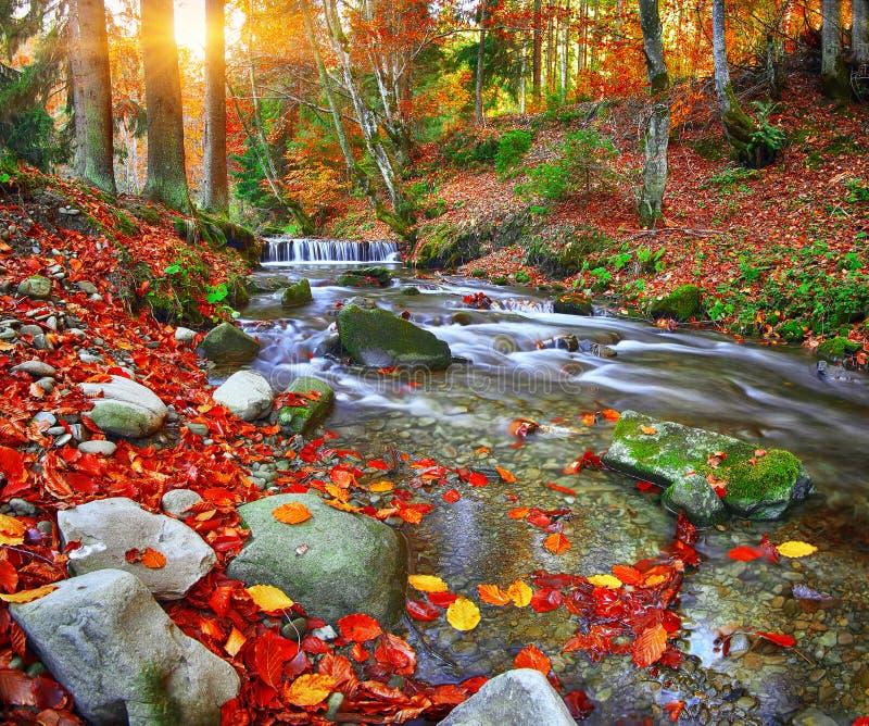 Ποταμός βουνών με τα ορμητικά σημεία ποταμού και τους καταρράκτες στο χρονικό χρόνο φθινοπώρου στοκ εικόνες