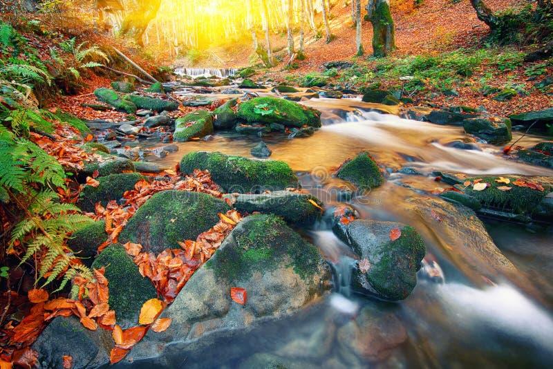 Ποταμός βουνών με τα ορμητικά σημεία ποταμού και τους καταρράκτες στο χρόνο φθινοπώρου στοκ εικόνες με δικαίωμα ελεύθερης χρήσης