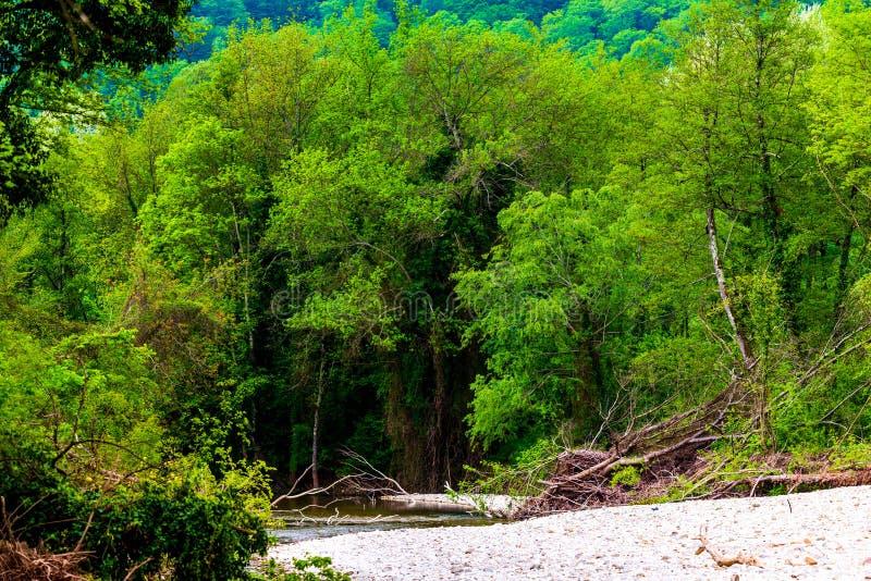 Ποταμός βουνών που διατρέχει του πράσινου δάσους στοκ εικόνα
