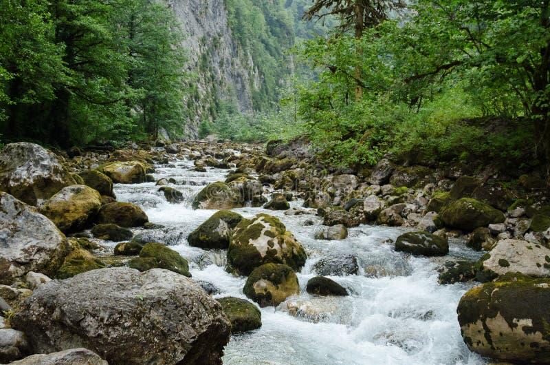 Ποταμός βουνών που διατρέχει του πράσινου δάσους στοκ εικόνες