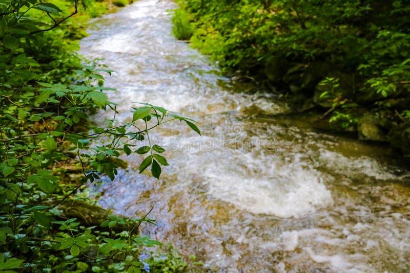 Ποταμός βουνών που διατρέχει του πράσινου δάσους στοκ φωτογραφίες