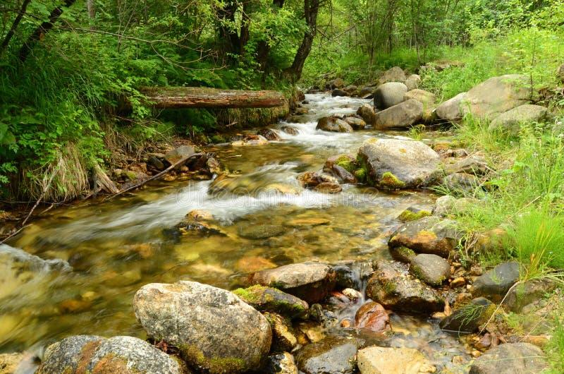 Ποταμός βουνών το καλοκαίρι στοκ εικόνες