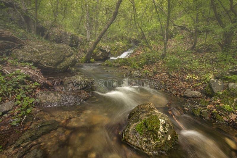 Ποταμός βουνών fogy στο δάσος στοκ εικόνες με δικαίωμα ελεύθερης χρήσης