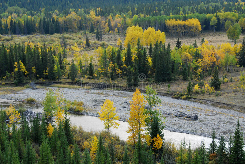 ποταμός δασών στοκ εικόνα