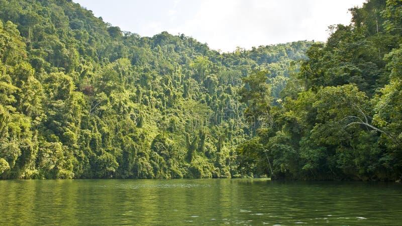 ποταμός ζουγκλών στοκ εικόνα