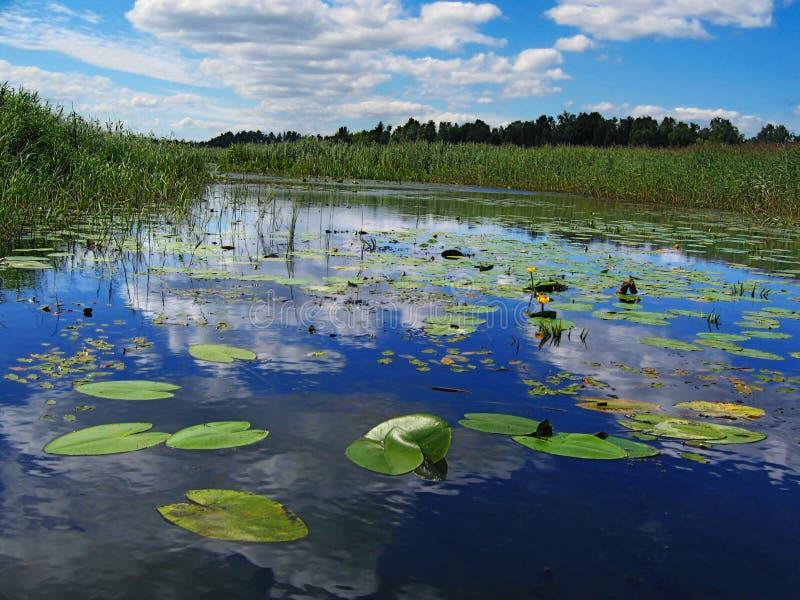 ποταμός ηλιόλουστος στοκ εικόνες με δικαίωμα ελεύθερης χρήσης