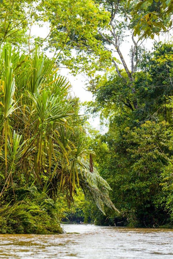 Ποταμός Ισημερινός Cuzutca στοκ φωτογραφία