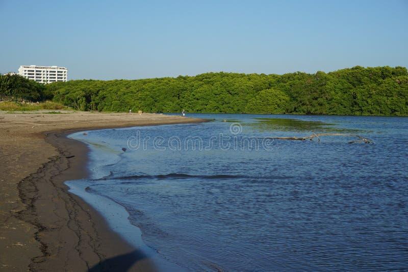 Ποταμός και βλάστηση στοκ εικόνες με δικαίωμα ελεύθερης χρήσης