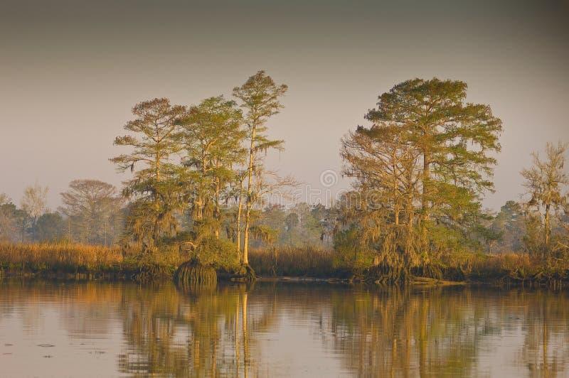 ποταμός κυπαρισσιών waccamaw στοκ εικόνες