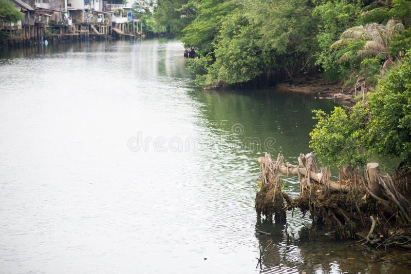 Ποταμός με τη ρίζα στοκ εικόνα