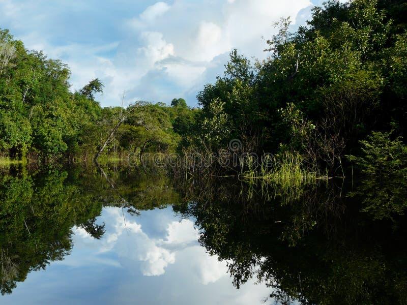 ποταμός ομορφιάς της Αμαζ στοκ εικόνες