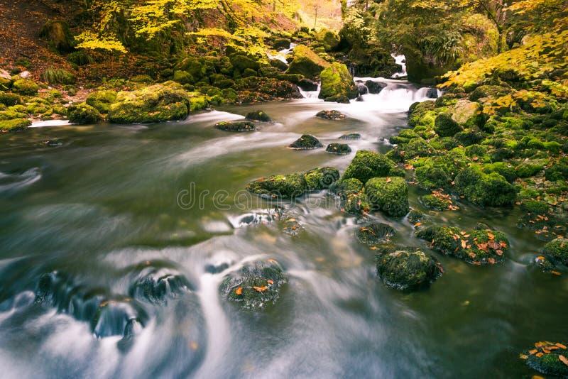 Ποταμός που διατρέχει των πράσινων Mossy βράχων στο δάσος πάρκων με το τέλος στοκ φωτογραφία