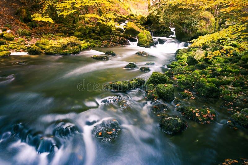 Ποταμός που διατρέχει των πράσινων Mossy βράχων στο δάσος πάρκων με το τέλος στοκ εικόνα με δικαίωμα ελεύθερης χρήσης