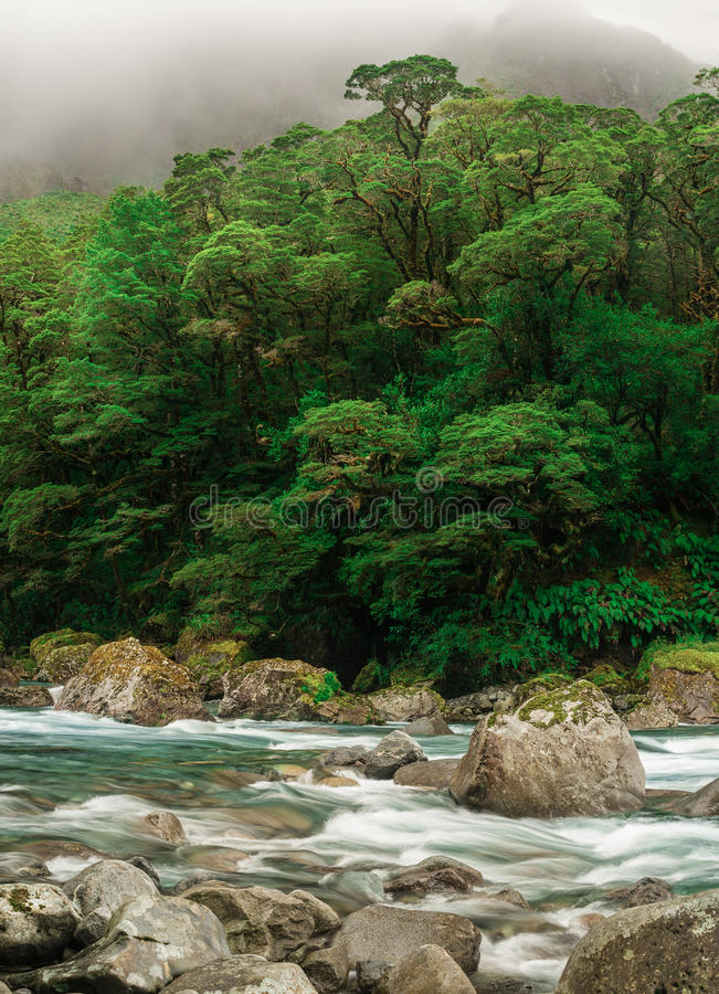 Ποταμός που περνά μέσω του δάσους στοκ φωτογραφία με δικαίωμα ελεύθερης χρήσης